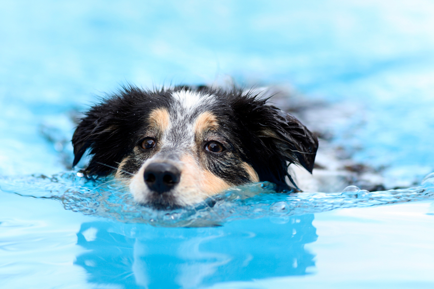 Dog Water Treatment Cleveland OH | Splash Your Pup - dogswimming1