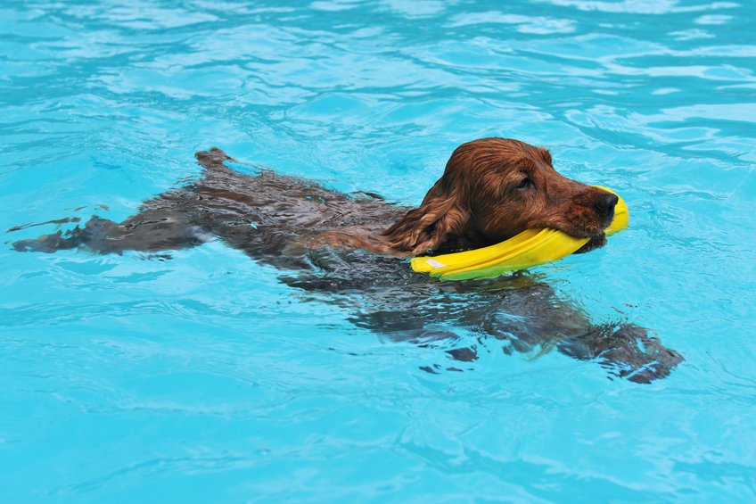Dog Water Treatment Canton OH | Splash Your Pup - dogswimming2