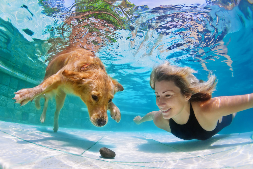 Dog Swimming Pool Cincinnati OH | Splash Your Pup - dogtrainer