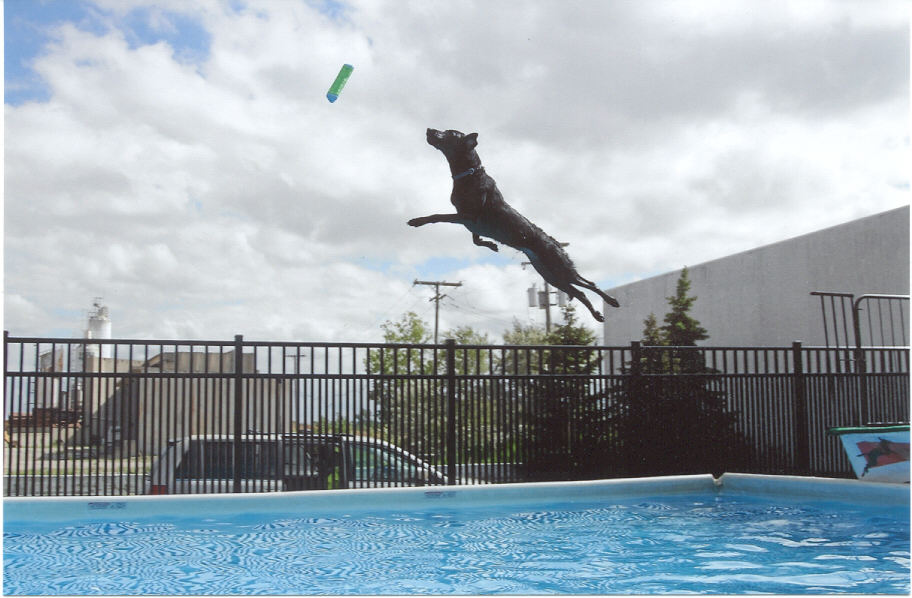 Dog Dock Jumping Fort Wayne IN | Splash Your Pup - storie_3