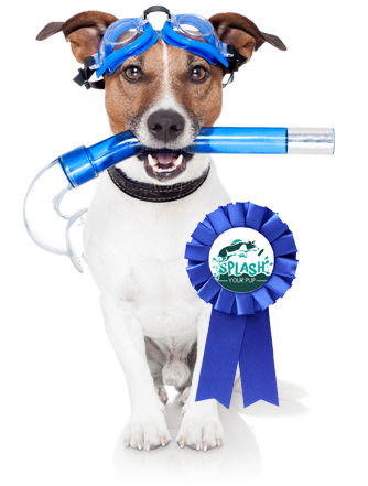Dog Swimming Moraine OH - Dog Diving, Jumping | Splash Your Pup - blue-ribbon-dog